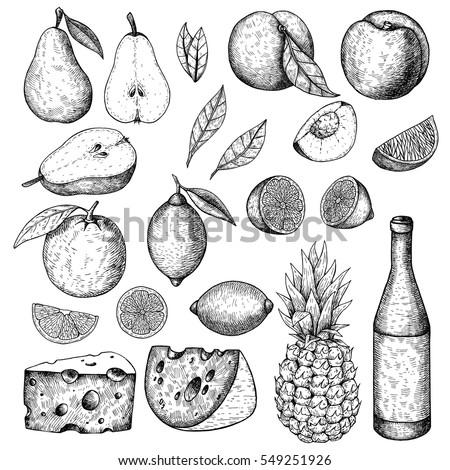 Hand drawn sketch food set. Pear, peach, lemon, orange, cheese, bottle of wine, citrus slices, leaves,. Vector vintage illustration. Menu design element.