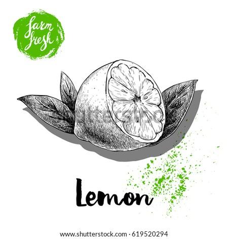 hand drawn sketch half lemon