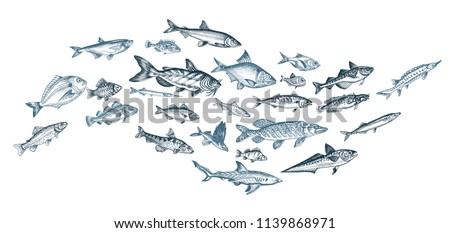 Hand drawn sketch illustration with fish. Wildanimal vector. Restaurant food card for seafood menu.