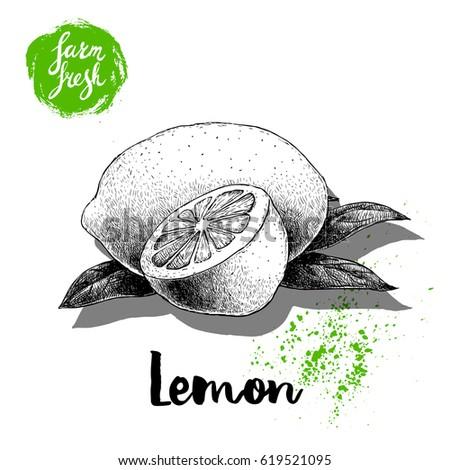 hand drawn sketch lemon with
