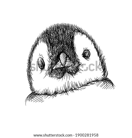 Hand drawn sketch of Penguin face on a white background. Penguin bird. Madagascar penguins. Close-up of Penguin face