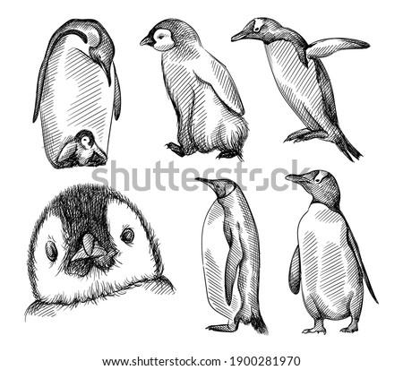 Hand drawn sketch of set of penguins on a white background.  Madagascar penguins. Adult penguin with baby penguin, penguin trying to fly, penguin face