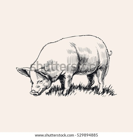 Hand Drawn Sketch Pig Vector illustration