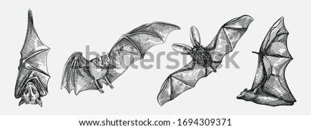 Hand-drawn sketch set of bats. Flying bat, bat hanging upside down, front view of the bat, bat from the back view Сток-фото ©