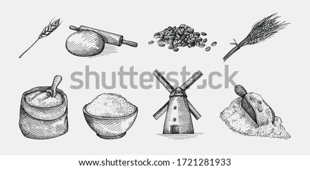 Hand-drawn sketch set of wheat and flour. Wheat and flour production making. Ears of Wheat; flour in bowl, rolling pin and dough; windmill; shovel wheat grains