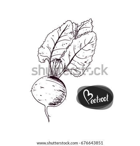 Hand drawn sketch style beet on white background. Beetroot with leaves. Vector illustration.