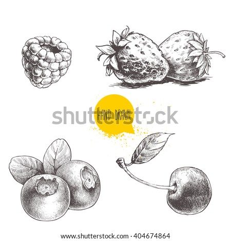 Hand drawn sketch style berries set isolated on white background. Raspberry, strawberry, cherry and blueberry. Healthy fruit vector illustration.