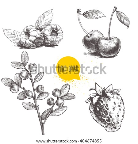 hand drawn sketch style berries