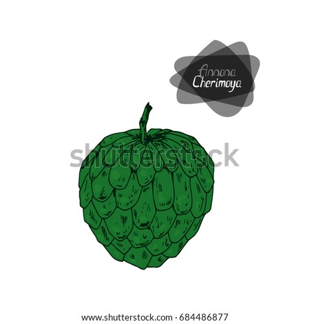 Hand drawn sketch style Cherimoya on white background. Color illustration.