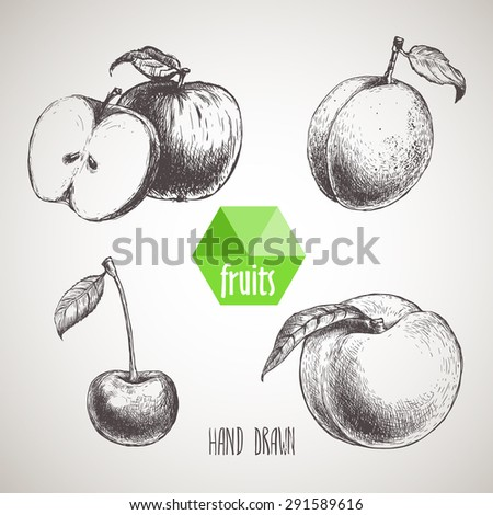 hand drawn sketch style fruits