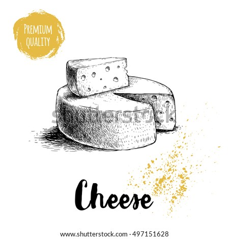 Hand drawn sketch style head of cheese and triangle piece of cheese. Vector organic food illustration poster. Quality product.