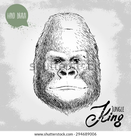 Stock Photo Hand drawn sketch style illustration of monkey face. Jungle King. Chinese zodiac sign. Gorilla male face. Dangerous and biggest monkey of the world. Vector illustration.