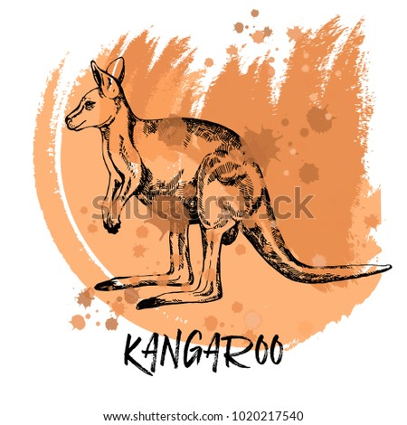 hand drawn sketch style kangaroo vector illustration isolated on