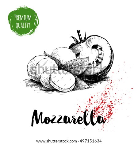 Hand drawn sketch style mozzarella cheese with basil leafs and half of tomato. Caprese salad ingredients. Vector organic food illustration poster. Quality italian product.