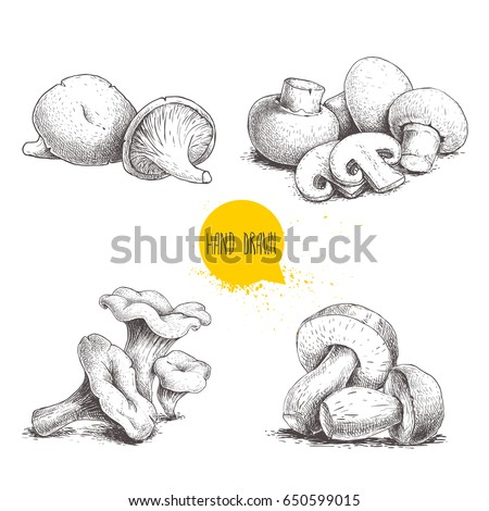 Hand drawn sketch style mushrooms compositions set. Champignon with cuts, oysters, chanterelles and porcini mushrooms. Organic farm and forest food food vector illustrations.