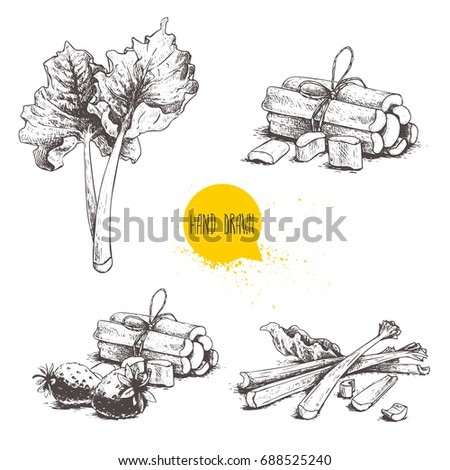 Hand drawn sketch style rhubarb set. leaves, bunches cut and whole with strawberries composition. Organic food component vector illustration isolated on white background.