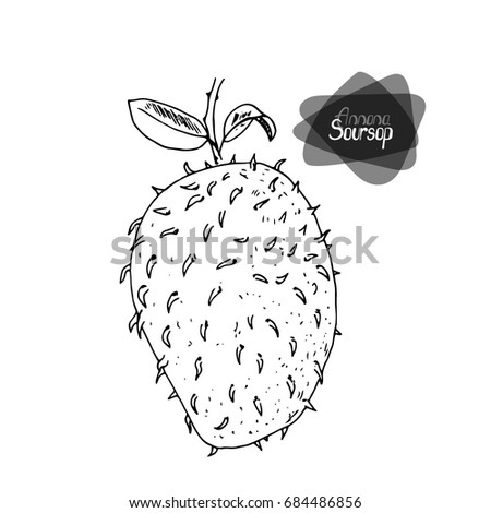Hand drawn sketch style Soursop on white background. Vector illustration.