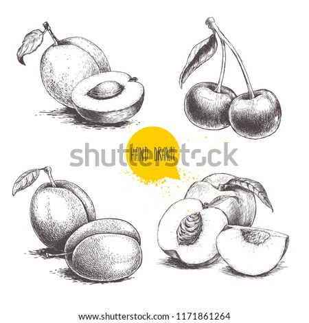 Hand drawn sketch style summer fruits set.Plum, apricot, cherry and peach compositions. Healthy organic food. Farm market products. Best for package design. Vector illustration.