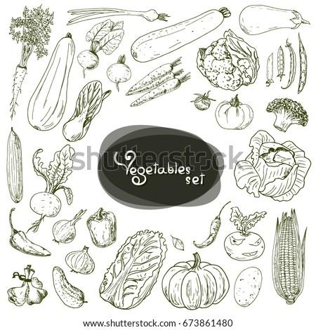 Hand drawn sketch style vegetable set. Cabbage, cucumber, zucchini, pea, beans, pumpkin, onion, pepper, beet, broccoli, carrot, eggplant, tomato, potato, pumpkin, corn, turnip.