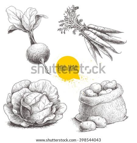 Hand drawn sketch style vegetables set. Cabbage, beet root with leafs, sack with potatoes and bunch of carrot. Farm fresh food isolated on white background.