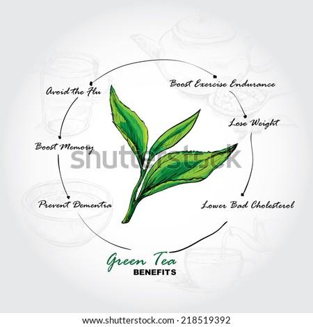 hand drawn sketch vector tea