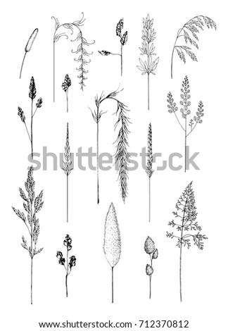 Hand drawn sketches of grass flower head varieties