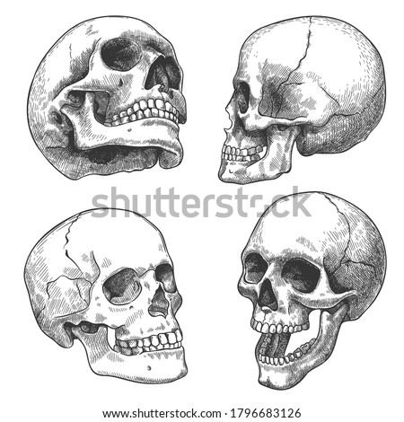 Hand drawn skull. Sketch anatomical skulls in different angles, gothic tattoo. Human skeleton dead head halloween engraving vector set. Evil and frightening face with open and closed teeth