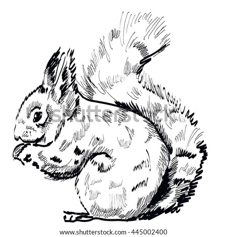 hand drawn squirrel on a white