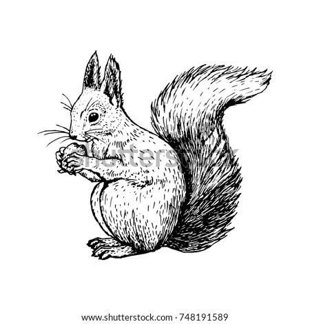 hand drawn squirrel retro