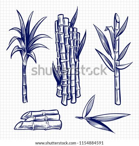 Hand drawn sugar cane set vector illustration. Cane plant, sugar ingredient stem, sugarcane harvest stalk