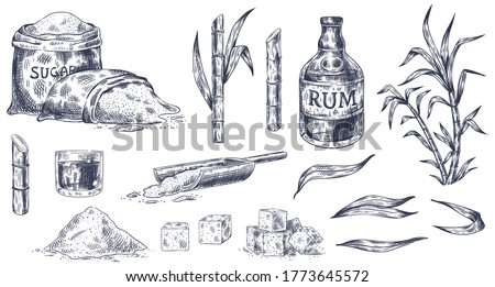 Hand drawn sugar cane. Sketch cane harvest, sugar sack and cubes, stalks sweet leaves organic plants, glass and bottle of rum vintage vector illustration. Product for alcohol drink manufacture