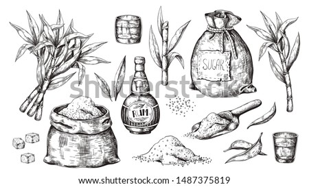 Hand drawn sugarcane and rum. Vintage liquor bottle and glasses, sugar sack and cubes, sugar organic plants. Vector illustration engraved alcoholic beverage image on white background