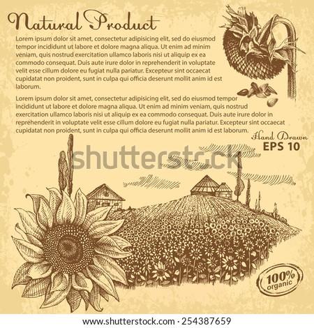 hand drawn sunflowers vector