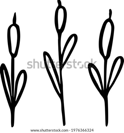Hand-drawn tall cattail. Reedlike marsh plant. Velvety reedmace. Vector clipart for backgrounds of landscapes with lakes, rivers, wetland. Black doodle. Illustration in themes of nature and hunting. Foto stock ©