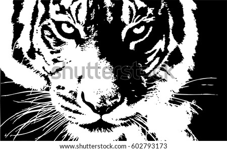 hand drawn tiger natural