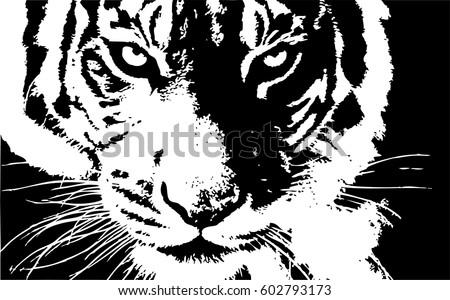 hand drawn tiger natural