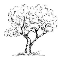 Hand drawn tree isolated on white background. Sketch, vector illustration.