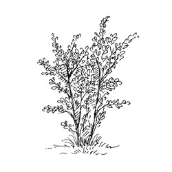 Hand drawn tree. Sketch, vector illustration isolated on white background.