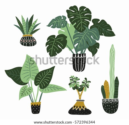 Hand drawn tropical house plants. Scandinavian style illustration, modern and elegant home decor. Vector design flowers.