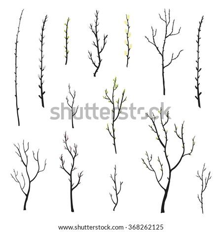 hand drawn twigs with buds