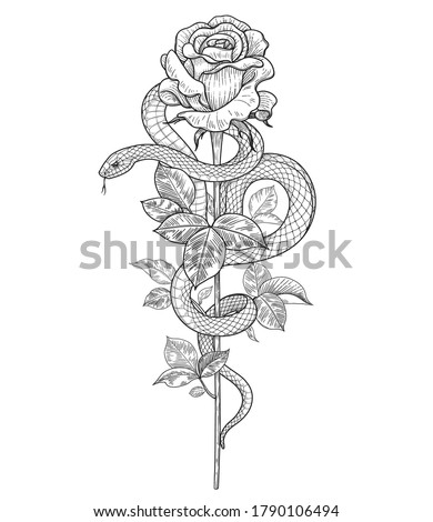Hand drawn twisted Snake and rose bud on high stem isolated on white. Vector monochrome serpent and flower. Floral vertical illustration in vintage style, t-shirt design, tattoo art, coloring page.