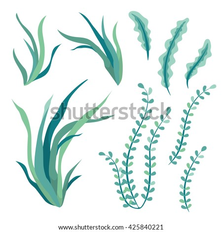 Hand drawn underwater seaweed elements isolated on white background. vector illustration.