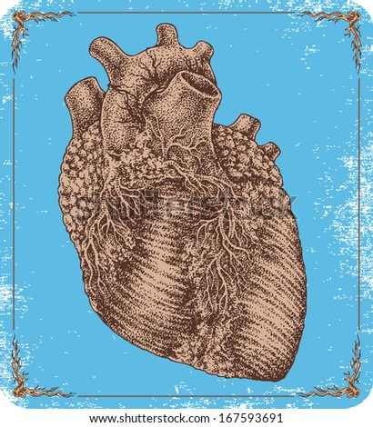 Heart Hands Drawing Hand Drawn Vector Human Heart