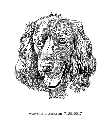 Hand drawn vector illustration English Cocker Spaniel. Sketch style dog. Realistic Symbol of 2018 new year. Animal portrait.
