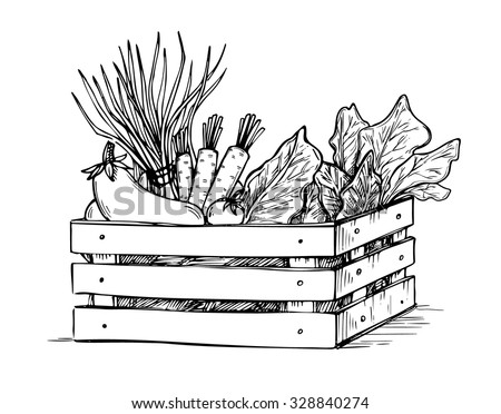 Hand drawn vector illustration - Fresh vegetables. Supermarket. Grocery store. Organic and vegan food.