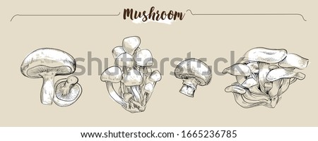 Hand drawn vector illustration mushrooms by retro  and vintage style, engraved dot and line art. include Shiitake(dried mushroom), Oyster Mushroom, Beech Mushroom and White Button Mushroom.