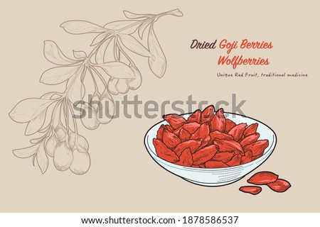Hand-drawn vector illustration of healthy food Goji-berry or wolfberry by retro style, drawing by engraved dot and line, include fresh and dried type. Stock photo ©