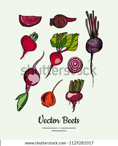 Hand drawn vector illustration set with red beets. Modern beetroot illustration. Hand drawn illustration of isolated red beet for vegetarian poster, banner, postcard, logo, icons, sticker, menu, shop.