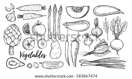 Hand drawn vector illustrations - collection of vegetables (carrots, garlic, tomatoes, asparagus, spinach). Design elements in sketch style. Perfect for packing, restourant menu, brochures, flyers