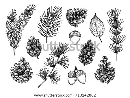 Hand drawn vector illustrations - Forest Autumn (Winter) collection. Spruce branches, acorns, pine cones, fall leaves. Design elements for invitations, greeting cards, quotes, blogs, posters, prints